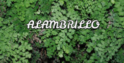alambrillo