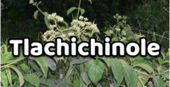 Tlachichinole